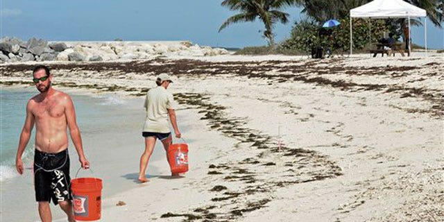 May 18: Crews collect sand samples at Fort Zachary Taylor State Park beach in Key West, Fla., to analyze tar balls found on shore.