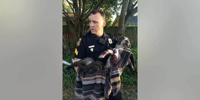 FILE - In this March 4, 2015, file photo, Tampa Police Department Sgt. Rich Mills carries an injured female dog that was left tied to a railroad track in Sulfur Springs, Fla. The Tampa Police Department announced Thursday, March 12, 2015, that two Tampa teens have been arrested for shooting the dog that was found tied to the tracks. (AP Photo/Tampa Police Department, File)