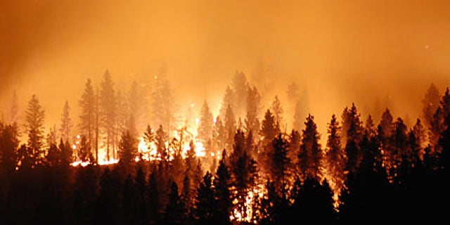 We need to handle the financial crisis like it's a forest fire