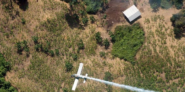 FILE - In this June 4, 2008 file photo, a police plane sprays herbicides over coca fields in El Tarra, in the Catatumbo river area, near Colombia's northeastern border with Venezuela. Colombia's President Juan Manuel Santos said Saturday, May 9, 2015 that he's halting use of a herbicide that's a key part of U.S.-financed efforts to wipe out cocaine crops, saying he's taking the move following a Health Ministry recommendation based on a World Health Organization decision to classify glyphosate as a carcinogen. (AP Photo/Luis Robayo, File)