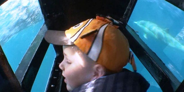 Boy in Eye to Eye Underwater Viewing Pod during Captain Dave's Dolphin and Whale Watching Safari