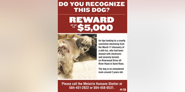 PETA also created a downloadable a flier to be hung around the city, which shows a graphic photo of the unneutered male pup with painful-looking chemical burns along his body.