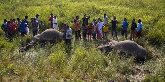 Indian villagers look the carcass of two endangered Asian elephants that were hit and killed by a passenger train near a railway track in Thakur Kuchi village on the outskirts of Gauhati, Assam state, India, Sunday, Nov. 19, 2017.