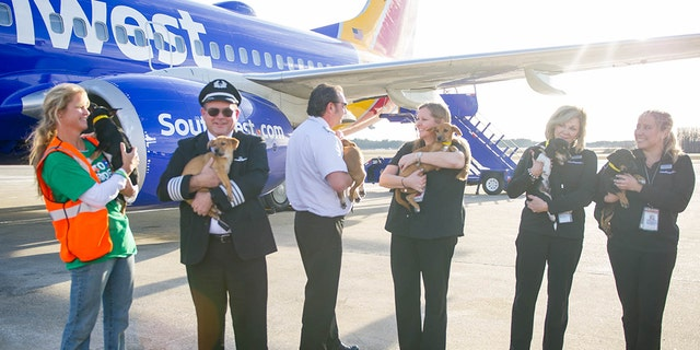 Transporting the four-legged passengers was months in the making.
