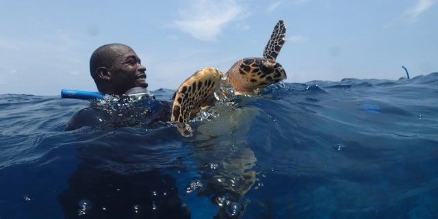 : A marine scientist holding a hawksbill sea turtle.
