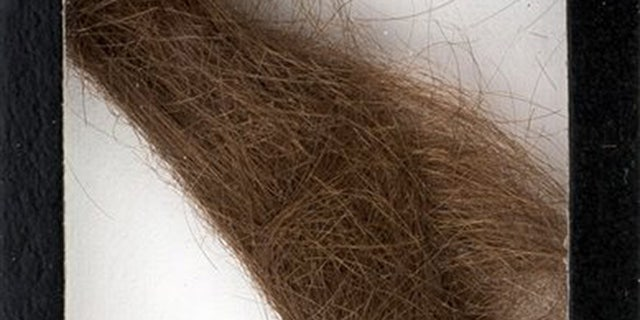 """This photo provided by Heritage Auctions shows a 4-inch lock of hair that was collected by a German hairdresser who trimmed John Lennon's hair before he started shooting """"How I Won the War."""" Heritage Auctions says the lock of hair is expected to sell for $10,000 at a Dallas auction later this month. (Heritage Auctions via AP)"""