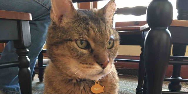"""Pilot suffered """"severe burns"""" in the devastating fires, but according to the Thompson family, is settling into his """"new"""" home just fine."""