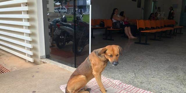 The dog's owner, a 59-year-old homeless man, was reportedly stabbed at a local park. The pooch is said to have rushed to the hospital after him.