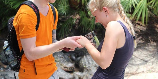 Gators can be seen in the background of a photo featuring a newly engaged couple.
