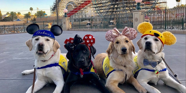 Volunteers say that Chekov, Aryssa, Essie and Ortega (left to right) had a great day at the park.