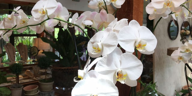 Orchids sit on display at Red Onion in Baton Rouge. Several florists throughout the state say they want to keep a licensing and testing requirement in place. Louisiana is the only state in the country that requires florists to be licensed.
