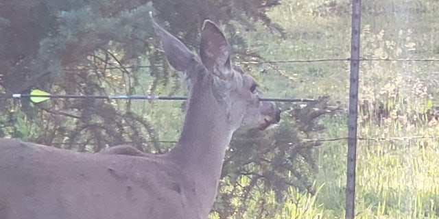 The deer were discovered in Shady Cove, located in the southern part of Oregon.