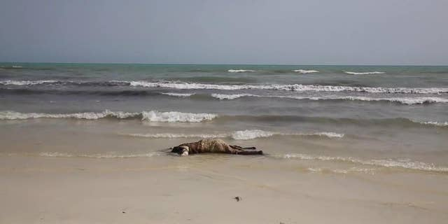 FILE -- In this June 2, 2016 file photo, the body of a migrant lays on the beach, one of more than 100 bodies pulled from the Mediterranean Sea after a smuggling boat carrying mainly African migrants sank, near the western city of Zwara, Libya. (APTV via AP, File)