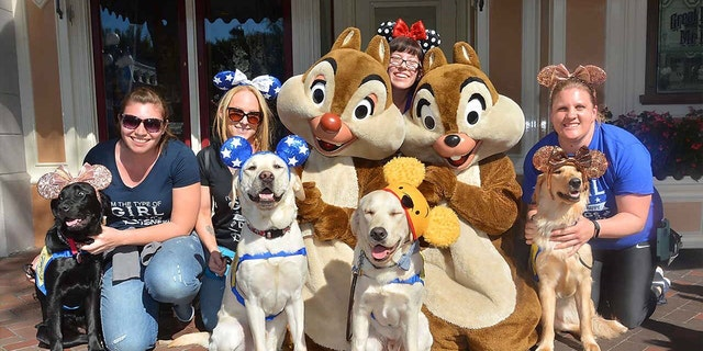 The organization breeds, raises and trains highly-skilled assistance dogs, placing them free of charge to children, adults and veterans with disabilities.