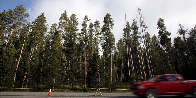 A shot of the Elephant Back Loop Trailhead is temporarily closed in Yellowstone National Park.