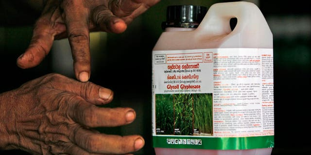 In this July 24, 2014, photo, a Sri Lankan agrochemical vendor gives instructions on how to use Glyphosate, the country's most popular weed killer, at a chemical sales point in Padaviya, Sri Lanka. A chronic kidney disease that has already killed up to 20,000 people over the past two decades and affects anywhere from 70,000 to 400,000 more in the country's North Central rice basket, remains an enigma without a name. Many in Sri Lanka, including the World Health Organization, have pointed to heavy use and misuse of agrochemicals as a possible culprit in a country that's among the world's top fertilizer users.