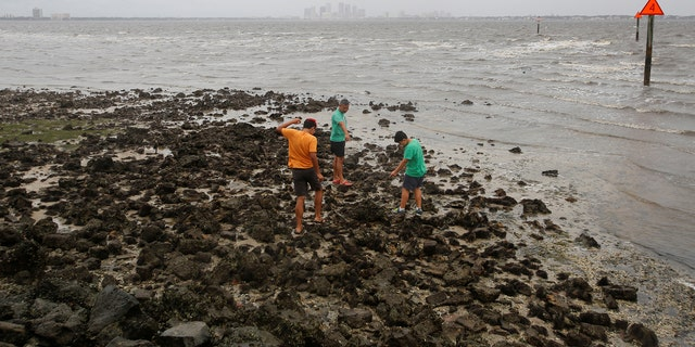 A man and his sons walk on the sea floor after water receded from Hillsborough Bay ahead of the arrival of Hurricane Irma in Tampa, Florida, U.S., September 10, 2017. REUTERS/Chris Wattie - RC1CB859A7F0