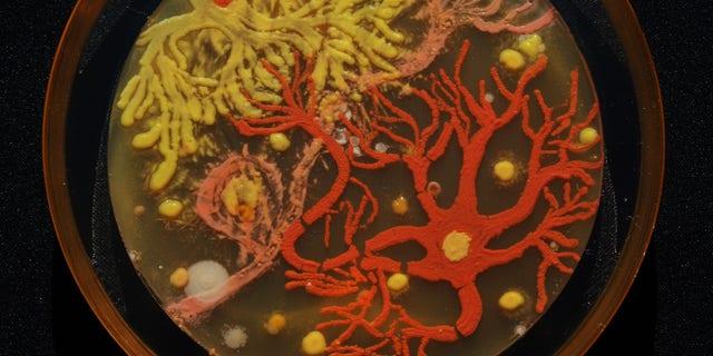"The winning entry was ""Neurons"" by Mehmet Berkmen and Maria Penil."