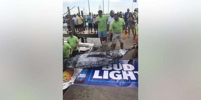 Florida fishermen catch 800-pound marlin, reel in $450G tournament