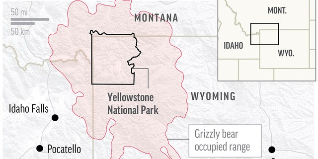 Map shows grizzly bear occupied range across Yellowstone National Park.