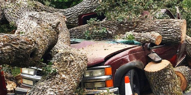 A centuries old massive oak tree crushed this truck after sections of it came crashing down overnight damaging parked vehicles in a neighborhood in Pleasant Hill, Calif., Thursday, Aug. 30, 2018. Residents in Pleasant Hill are now asking who's responsible for the damage. (Rick Hurd/East Bay Times via AP)