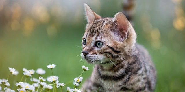 "A town in New Zealand has proposed a ""pest"" plan to ban cats."