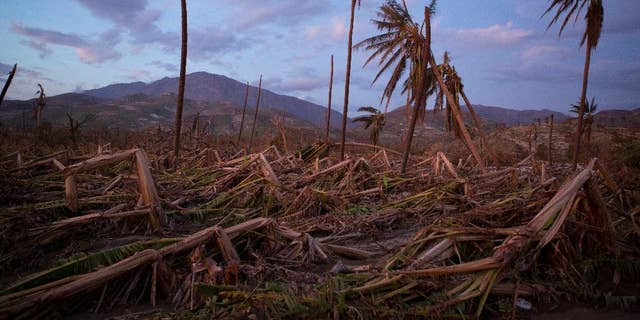 FILE - In this Oct. 10, 2016 file photo, banana and coconut trees are bent and broken along a southern coast road near the town of Roche-a-Bateau, Haiti, left behind by Hurricane Matthew. Hundreds of thousands of people in southern Haiti are facing food shortages three months after the storm destroyed crops and livestock in the region, international aid organization Oxfam said Wednesday, Jan. 4, 2017. (AP Photo/Rebecca Blackwell, File)