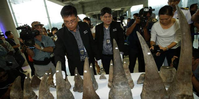 A Thai customs officer displays seized rhino horns at the customs office in Suvarnabhumi airport, Bangkok, Thailand, March 14, 2017.