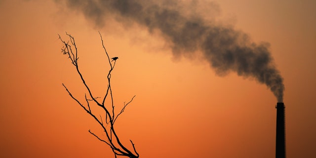 File photo - A crow sits on a dead tree and smoke emits from the chimney of a factory as the sun sets in New Delhi, India, Tuesday, Sept. 23, 2014. (AP Photo/Altaf Qadri)
