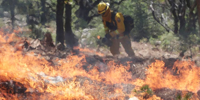 September 23, 2014: A firefighters sets a controlled burn with a drip torch while fighting the King Fire in Mosquito, Calif. (AP Photo/Marcio Jose Sanchez)
