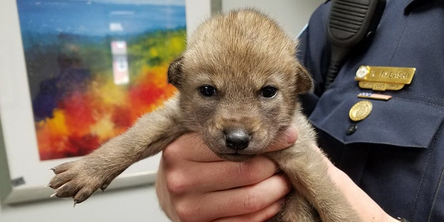 """Police in Illinois shared a snap of a """"puppy"""" on social media -- as well as its true identity."""