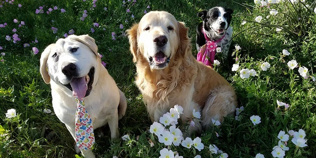 Beaux Tox, left, is pictured with his siblings Riley, middle, and Scout, right.