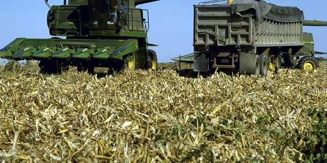 Corn is the main feedstock used for producing ethanol fuel in the United States. (Credit: USDA.gov)