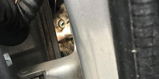 The kitten was unharmed, officials said.
