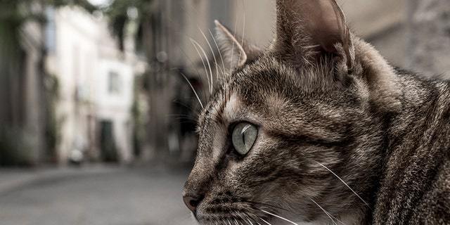 Domestic cats may be banned in one New Zealand town.