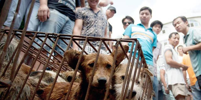 In this Sunday, June 21, 2015 photo, dogs in cages are sold by vendors at a market during a dog meat festival in Yulin in south China's Guangxi Zhuang Autonomous Region. Restaurateurs in a southern Chinese town are holding an annual dog meat festival despite international criticism. (Chinatopix via AP) CHINA OUT