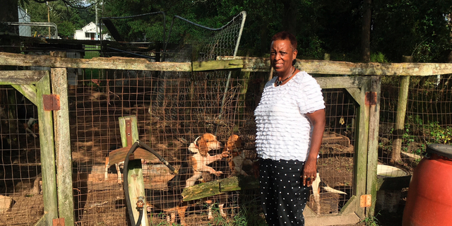 In this Sept. 18, 2018, photo, Marian Sutton checks on her deceased husband's dogs in their backyard kennel near Kinston, N.C. Bennie Lee Sutton's death was attributed to Hurricane Florence because he was outside with the dogs as the storm's winds swirled across the area and suffered an apparent heart attack, his family said. (AP Photo/Emery P. Dalesio)