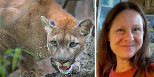 Authorities said Tuesday that Diana Bober, 55, was killed by a cougar in Mt. Hood National Forest in Oregon. She was reported missing two weeks ago.