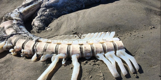 "One beach goer said the carcass smelled like a ""hot day at a fish market."""