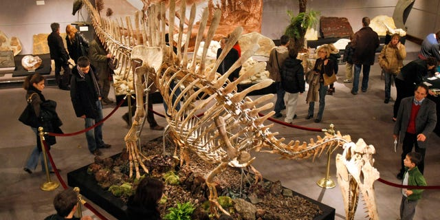 The skeleton of a prehistoric Spinosaurus during a presentation to the public at Drouot Montaigne auction house in Paris, Sunday, Nov. 29, 2009.