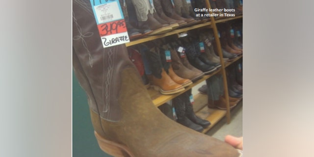 Pictured are giraffe leather boots sold at a retail store in Texas, according to Humane Society International.