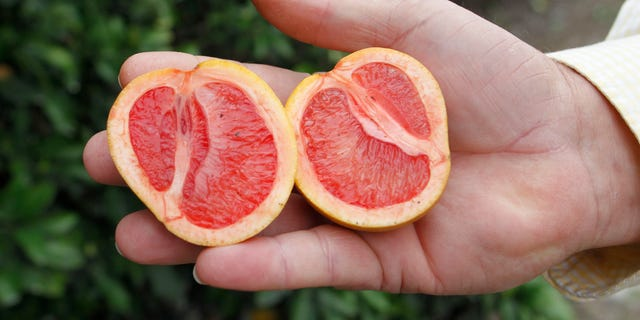"""Citrus affected by """"greening,"""" an insect-borne bacterial disease is shown as Larry Hardie, a grove manager for Barnes Citrus, Inc. holds malformed star ruby grapefruit in a grove in Vero Beach, Florida."""