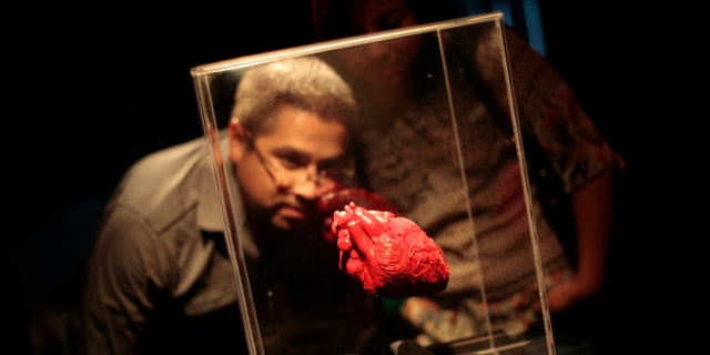 A man looks at a plastinated heart during the exhibition 'Body Worlds' by Gunther von Hagen at the Museo Miraflores in Guatemala City July 6, 2012.