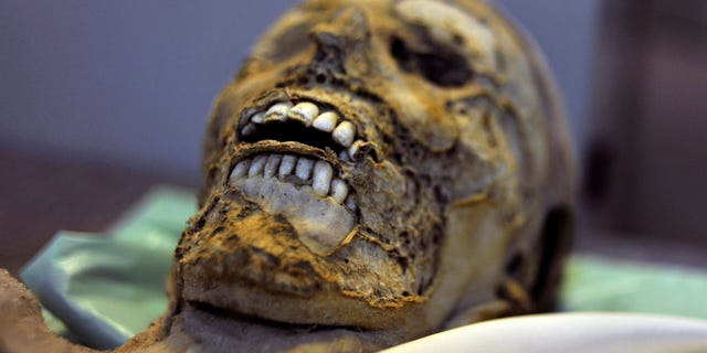 One of the 265 mummies resting in cardboard boxes in the Hungarian Natural History Museum in Budapest, Hungary.  (AP Photo/Bela Szandelszky)