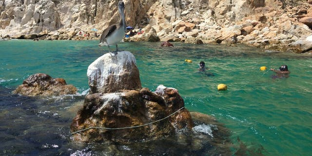 Cabo San Lucas Bay is the focus of a National Marine Park effort to protect the marine habitat from motorized boats.