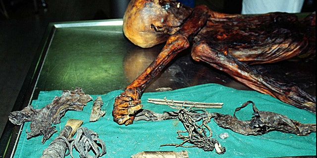 The fat and meat of wild goat, meat of red deer, whole wheat seeds and traces of fern leaves and spores were discovered in Oetzi's corpse, researchers detailed in the scientific journal Current Biology.