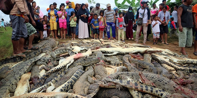Local residents look at the carcasses of hundreds of crocodiles from a farm after they were killed by angry locals following the death of a man who was killed in a crocodile attack in Sorong regency, West Papua, Indonesia.