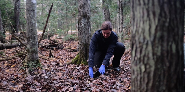 Investigator Laura Frizzo searches the woods in Michigan's Upper Peninsula.