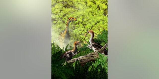 The baby <i>Limusaurus inextricabilis</i> dinosaur had teeth, allowing it to eat meat, whereas the adult did not have teeth, and likely ate plants.