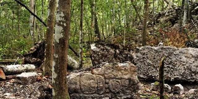 Sculpted stone shafts called stelae are pictured at the newly discovered ancient Maya city Chactun in Yucatan peninsula.